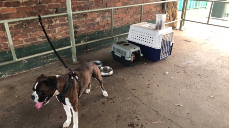 The dog on his lead and two cats in their crates at a picnic shelter.