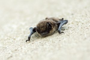 bat on wall