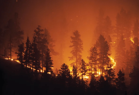 Wildfire (image)