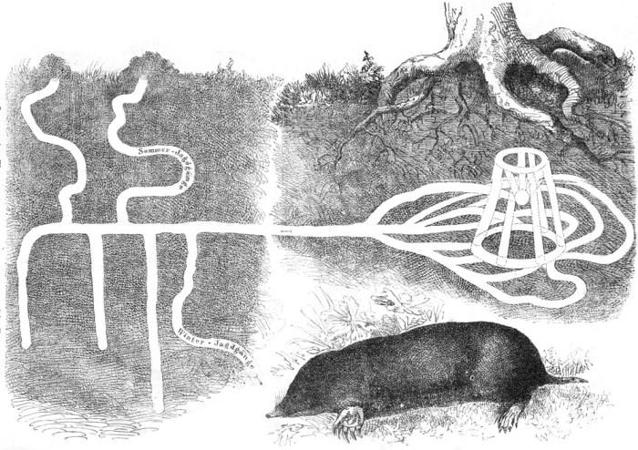 ходы крота, как их представлял художник позапрошлого века