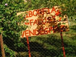 iborfia122