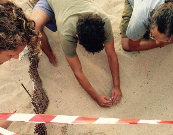 Χιλιάδες χελωνάκια στον Κυπαρισσιακό