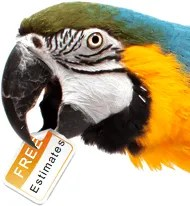 free painting estimate parrot gracie