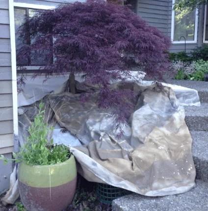 covering plants paint