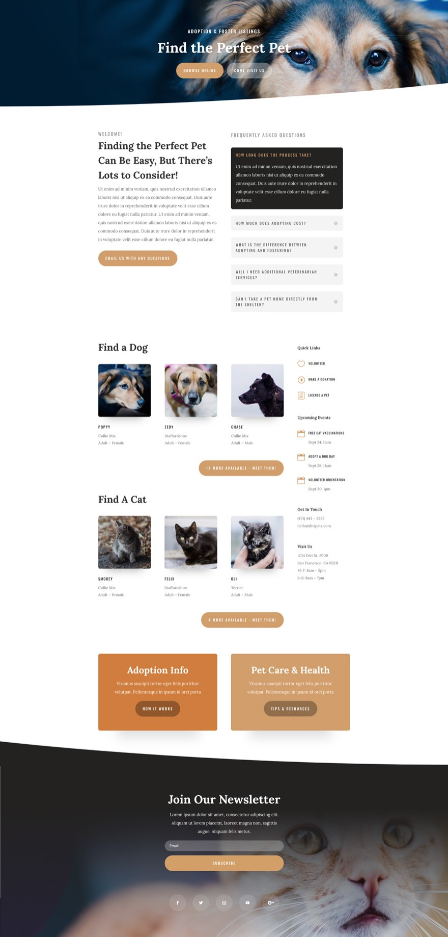 Animal Shelter Divi Layout
