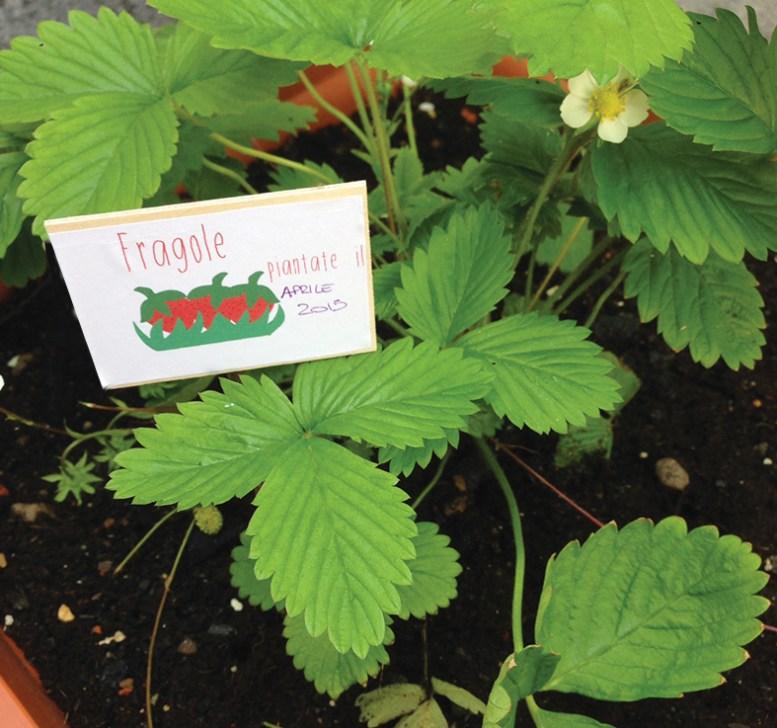 Etichette-piante-balcone-foto3