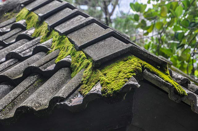 Other Treatments Roof Moss On Pleasanton Roof, Cleaned By Element Roofing.