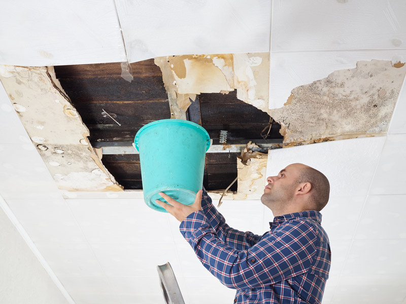 How To Remove Ceiling Mold After A Roof Leak Element Roofing