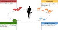 Mögliche_Übertragungswege_fledermausspezifischer_Pathogene_auf_den_Menschen