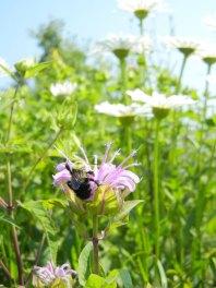 Office Prairie Landscape Biodiversity