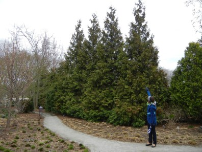 Architectural Functions of Landscapes - shrubs