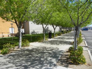 Trees create a separation between the traffic onsite and what's happening in the Town Square.