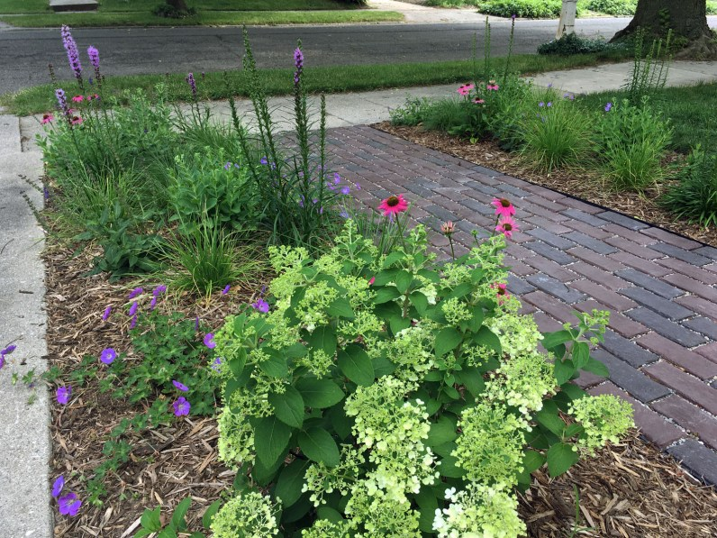 A variety of flower colors and textures enhance a sunny garden.