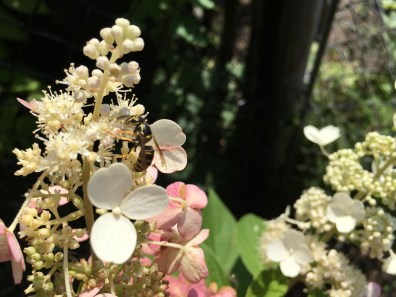 A diverse habitat provides food source for pollinators.