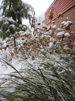 Innovative beauty in winter