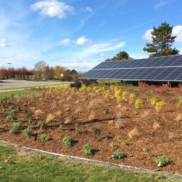Pollinator plants as foreground for solar panel