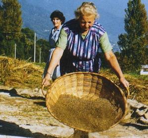 pula e grano