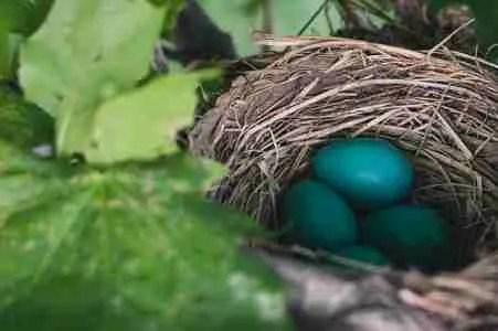 Una Pasqua nel nido