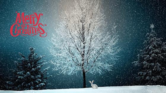 Il Natale delle Volpi