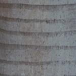 tronc de palmier, une merveille de perfection !