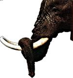 Un éléphant, ça trompe énormément... !