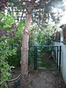 Prunus,Malus evereste, Cornus,Viburnum,