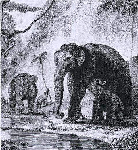 memoires d'elephant lorient