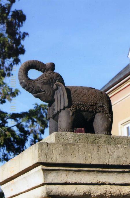 elephant398