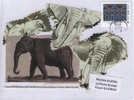 elephantD11