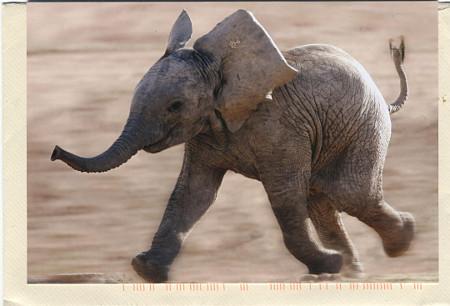 elephant_2014_01 (14)