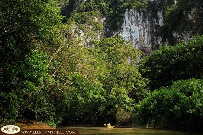 Natural habitat in a preserve area