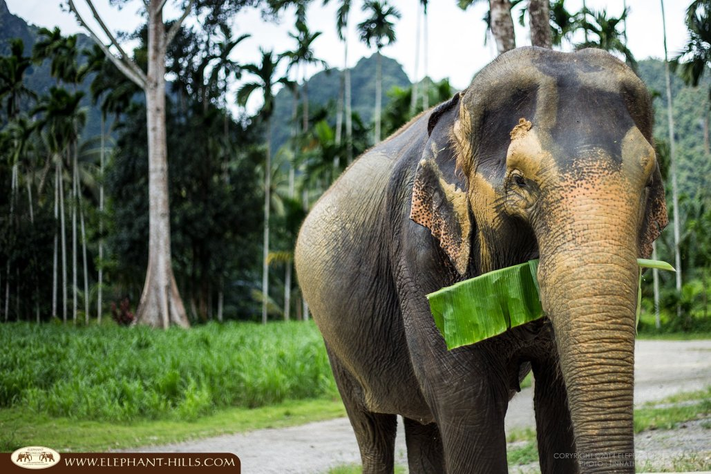 Thailand Honeymoon with Elephants!