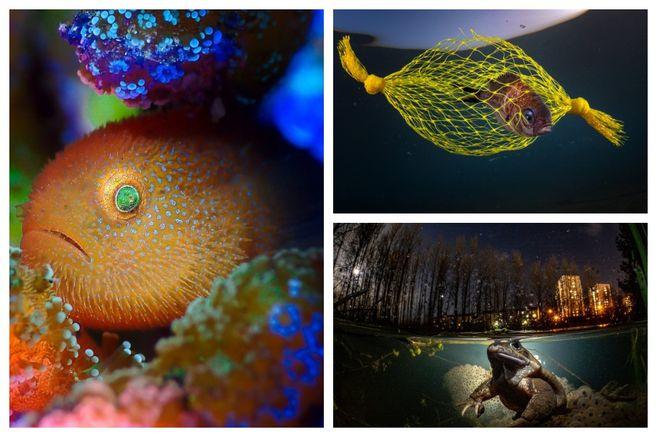 Estas son las imágenes ganadoras del concurso de fotógrafo subacuático del año