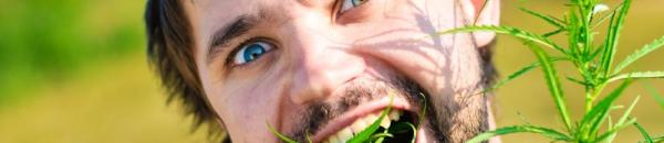 young-man-eating-leaves-of-cannabis