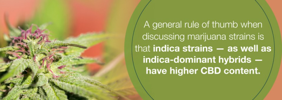 CCBD dominate cannabis strains