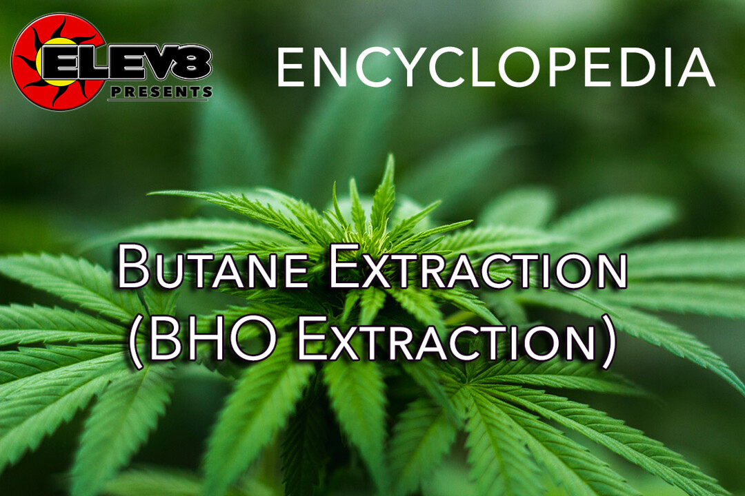 What does Butane Extraction (BHO Extraction) mean? | Elev8