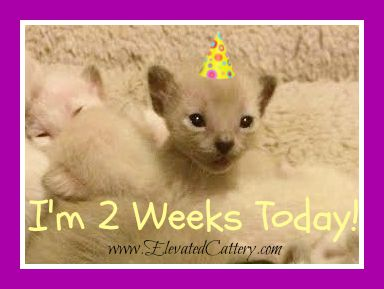 Kittens are 2 Weeks Old Today