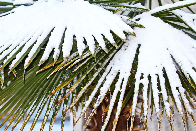 Snow Shovels and Palm Branches