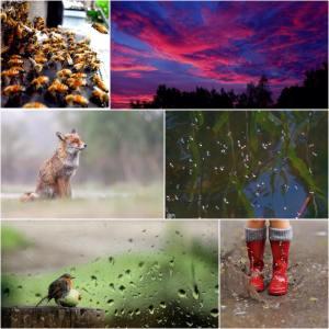 weer voorspellen met dieren fb 2015