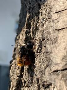 Wildbienenliebe in unerem Garten! Mit Kindern die Natur erleben und begreifen. Wildbienen Hotel selber bauen. Mehr Ertrag im Garten duch Wildbienen.