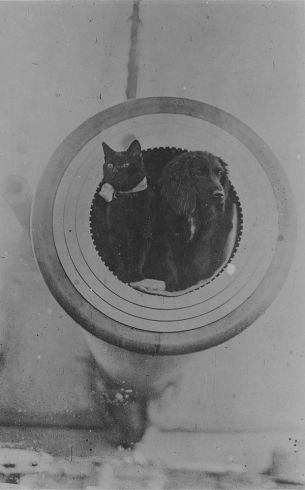 CatsAtSea26