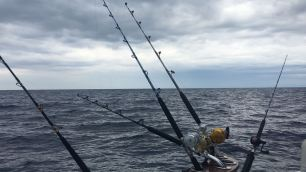 In pesca