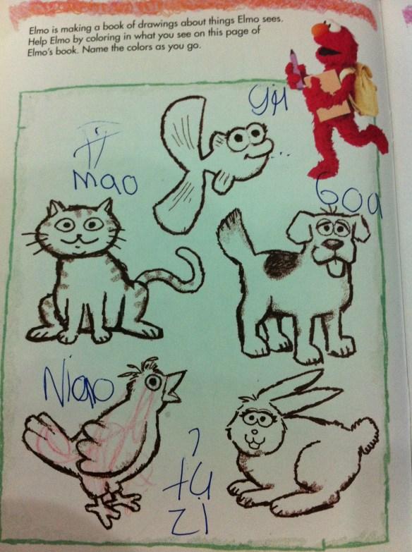 Mao for Cat in hanyu pinyin