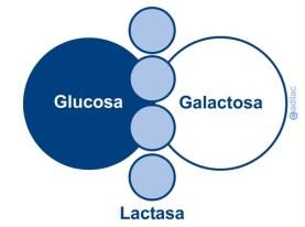Primeras preguntas - Lactosa