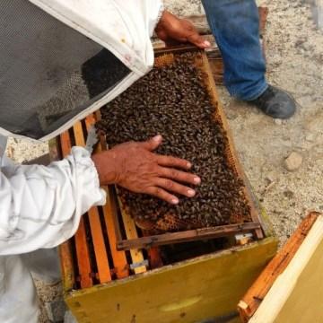 ¿Qué es la apicultura?