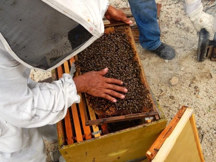 Foto de un apicultor con una caja propia de apicultura moderna.