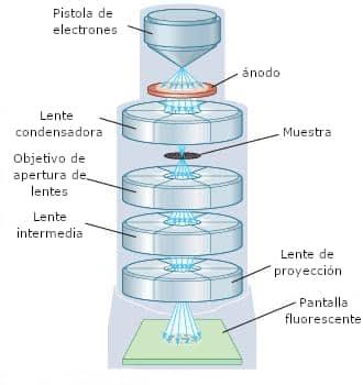 microscopio electrónico de transmisión partes
