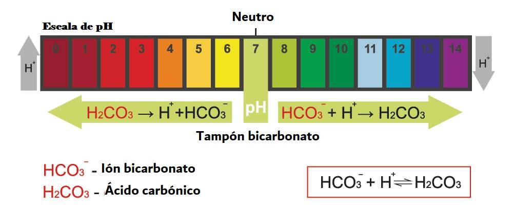 tampón bicarbonato ph dióxido de carbono sodio naco3 co2 sangre