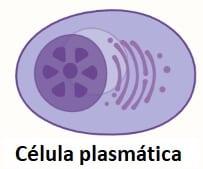 Células de plasma