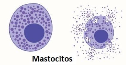 Mastocitos